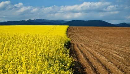 Украинцы могут купить землю в США, Великобритании, Испании, Германии, Австрии , но не могут это сделать у себя на родине