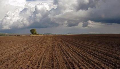 Законопроект об обороте сельскохозяйственной земли, принятие которого позволило бы запустить земельный рынок в Украине, пока не вносится на рассмотрение парламента из-за отсутствия в ВРУ надлежащей поддержки документа
