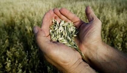 Приоритетными задачами Министерства аграрной политики и продовольствия Украины в 2017 году являются земельная реформа, стимулирование развития аграрной сферы, улучшение качества и обеспечение безопасности пищевых продуктов и развитие органического производства