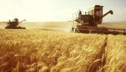 Степова частина України, на яку припадає велика частина збору зернових, визнана зоною ризикованого землеробства