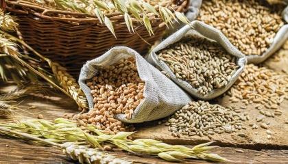 Из-за невозможности качественно смешивать зерно на грузовых судах цена на продовольственную пшеницу из Украины была намного ниже, чем цена на такую же пшеницу из России
