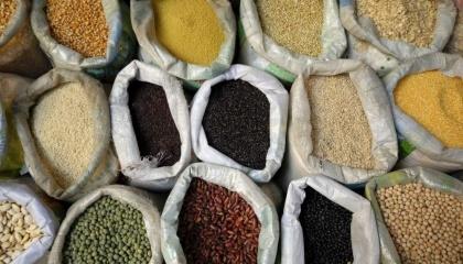 За попередніми оцінками в поточному 2016/2017 маркетинговому сезоні очікується новий рекорд з виробництва зернових — 64,2 млн т з експортним потенціалом на рівні понад 40,2 млн т