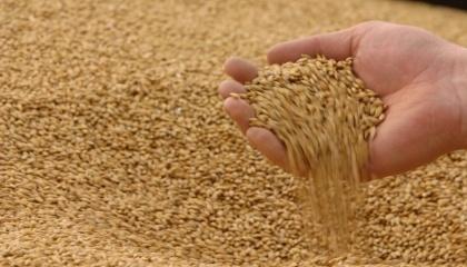 Досвід австралійських фермерів показує, що зберігати зерно в підземних сховищах можна без ризиків для нього до 11 років