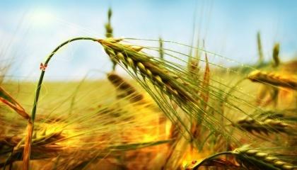 Ями - прості сховища, придатні для тривалого зберігання місцевих і стратегічних запасів зерна, а також сезонних надлишків