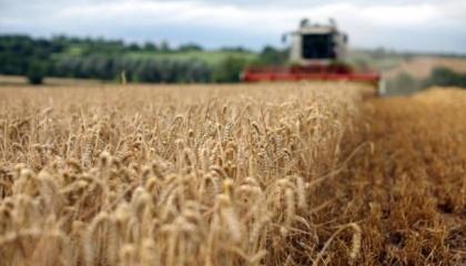Внаслідок поєднання факторів, які ще не до кінця вивені, втрати врожаю в Європі оцінюються в 20%, а дані з Південної Америки оцінюють втрати від рамуляріозу до 70%