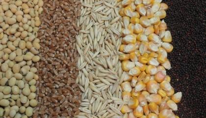 Обсяги виробництва зернових і зернобобових культур у 2017 році становитимуть 62,2 млн т, що на 5,9% менше, ніж торік