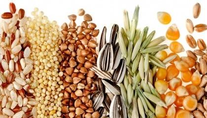 За останній рік експорт суттєво зріс, приріст по зерновій групі становить 11,3%. Про це свідчать статистичні дані SGS Group