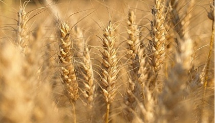 """Украина является так называемой """"хлебной корзиной Европы"""", одной из основных сельскохозяйственных стран"""