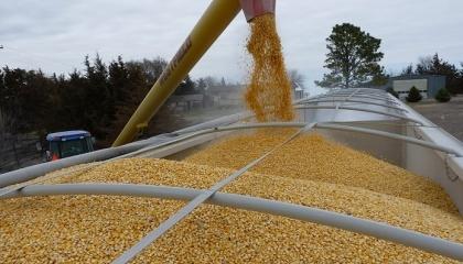 Першу десятку країн-лідерів по імпорту українських зернових очолює Єгипет. У минулому маркетинговому році ця країна купила 4 704 тис. т зерна