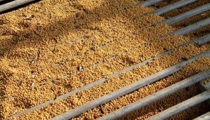На сьогоднішній день ринок насіння в Україні існує і він навіть перенасичений. Але питання викликає якість цього насіння