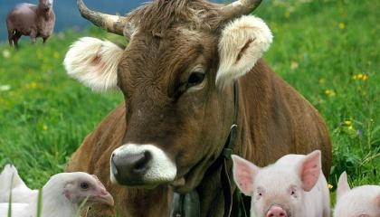 Почему-то никто не называет нашу страну, в которой так хорошо развито сельское хозяйство, фермой Европы