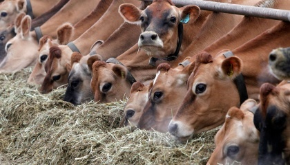 Іноземні інвестиції у сільське господарство у 2016 р. спрямовувалися переважно на будівництво тваринницьких комплексів