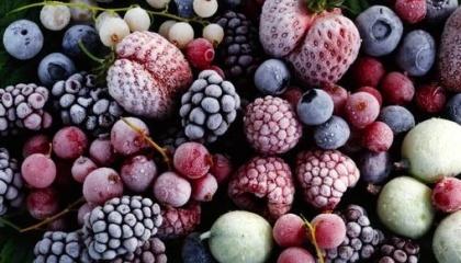 Фермеры из ВЛТ «Флора», которые получить сертификат на органическую ягоду, собрали по 10 т замороженной малины и клубники для экспорта