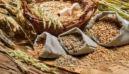 """Компания """"Мироновский хлебопродукт"""" (МХП) - один из крупнейших производителей мяса птицы в Украине, планирует выращивать органическое зерно для поставок в страны ЕС"""