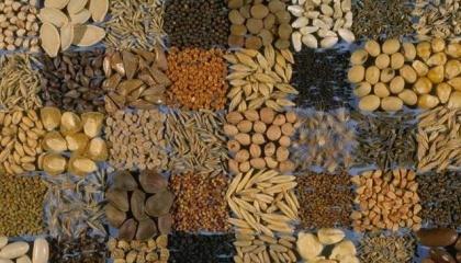 Аграрії зібрали близько одного мільйона 300 тис. т зерна. А це на 200 тис. т більше від урожаю 2015 року