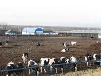 Курс на тваринництво фото, ілюстрація