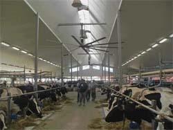 Молочний бізнес Канади: секрети успіху фото, ілюстрація