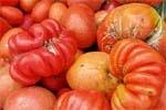 Занепад овочівництва:  причини чи наслідок? фото, ілюстрація