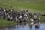 Молочне скотарство: складові рентабельного виробництва фото, ілюстрація