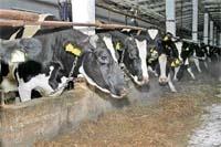 Скотарство — це вигідно фото, ілюстрація