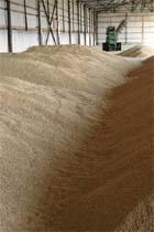 Зерно й шкідники в коморі — несумісні фото, ілюстрація