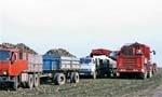 Криза в український  цукровій галузі минає фото, ілюстрація