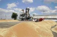 Колапс зернового ринку: винні всі! фото, ілюстрація