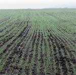 Рекомендації щодо захисту рослин в Україні у 2007 році фото, ілюстрація