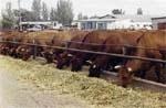 Бізнесова привабливість племінного молочного скотарства фото, ілюстрація
