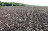 Основні напрями розвитку землеробства в Україні фото, ілюстрація
