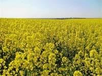 Чи приживеться  біопаливо в Україні? фото, иллюстрация