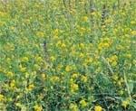 Багаторічні трави фото, ілюстрація