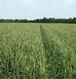 Прогноз Єврокомісії  щодо світових ринків сільгосппродукції фото, ілюстрація