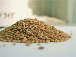 Внесення добрив Еколист восени  збереже та примножить ваш урожай! фото, ілюстрація
