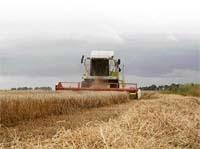 Чи буде Україна з зерном? фото, ілюстрація