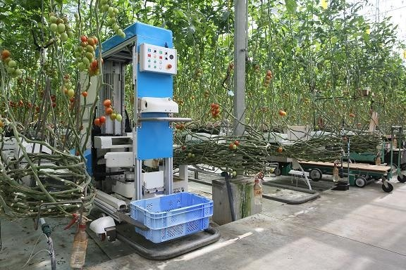 В Японии робота научили собирать помидоры фото, иллюстрация
