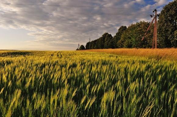 Коли і як сіяти озимий ячмінь у зв'язку з екстремальною посухою: рекомендації на осінь 2020 року фото, ілюстрація