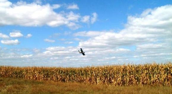 Десикация кукурузы — коммерческое навязывание или технологическая необходимость? фото, иллюстрация