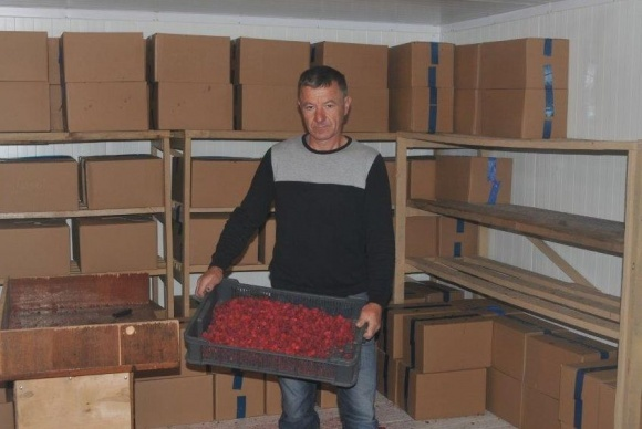 Гаражное замораживание ягод малины и прямой контракт в ЕС. Опыт А. Ступинского фото, иллюстрация
