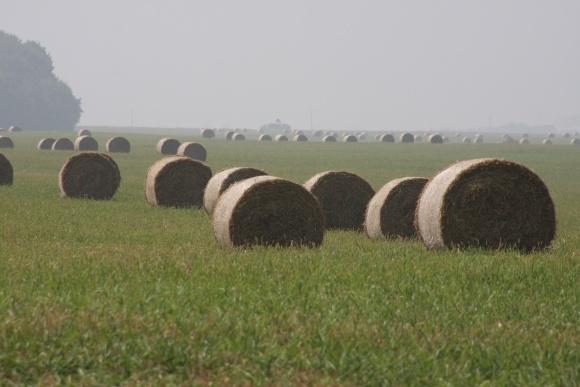 Солома як джерело енергії для сільського господарства фото, ілюстрація