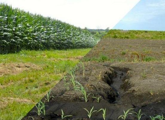 Эрозия почв: бороться с проблемой, а не с симптомами фото, иллюстрация