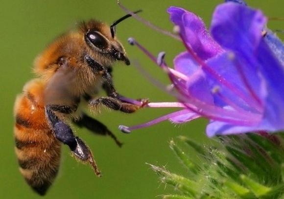 Чим викликана масова загибель бджіл: версії фахівців фото, ілюстрація