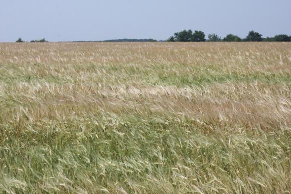 Протравитель зерна Табу® Нео — скажите «НЕТ» вредителям всходов! фото, иллюстрация