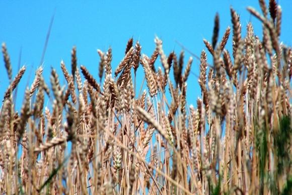 «Кріосауна» для зерна або технологія охолодження зерна фото, ілюстрація
