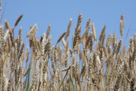 Збільшення експорту зерна чекати не варто фото, ілюстрація