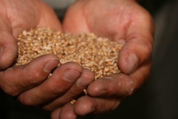 Обробка насіння — потужний фундамент майбутнього врожаю фото, ілюстрація