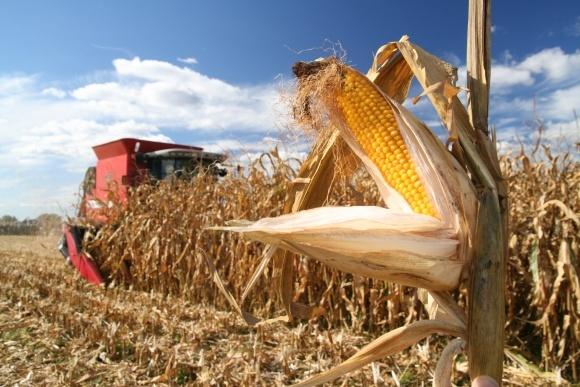 Як вибрати жатку для збирання кукурудзи фото, ілюстрація