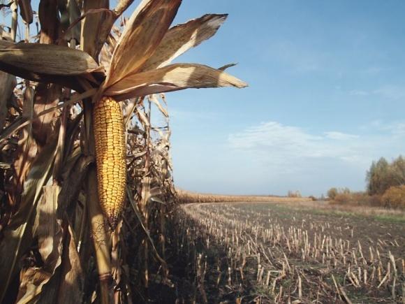 Не тот урожай, что в поле, а той, что в амбаре фото, иллюстрация