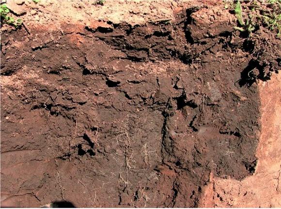 Как управлять уплотнением почвы по No-till? фото, иллюстрация