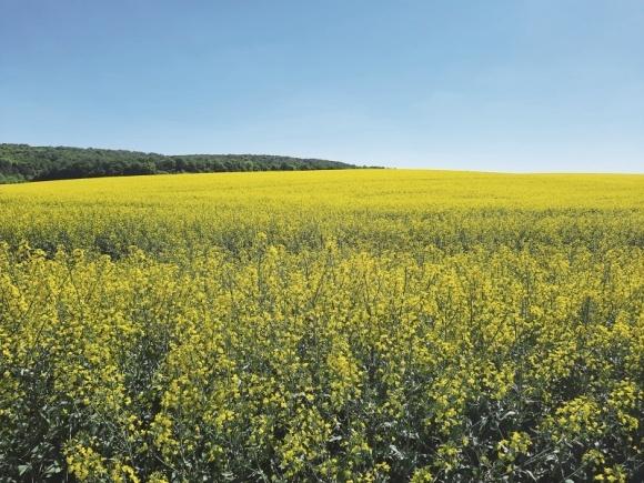 С гибридами озимого рапса Brevant™ seeds работать эффективно и прибыльно фото, иллюстрация